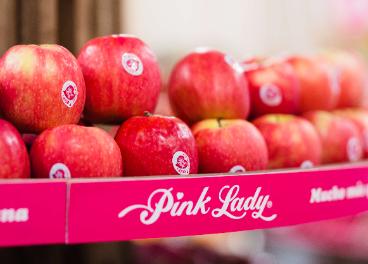 Cosecha de manzanas Pink Lady