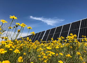 Paneles solares Nestlé