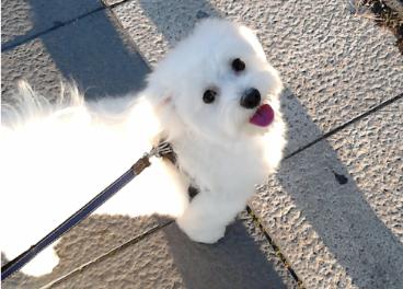 Ranking de retailers especializados en mascotas