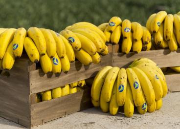 IGP Plátano de Canarias