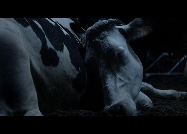 Fotograma del spot de Pascual de vaca durmiendo