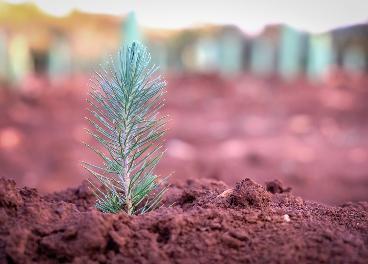 Nestlé colabora con la reforestación