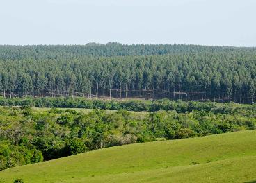 Reforestación C&A