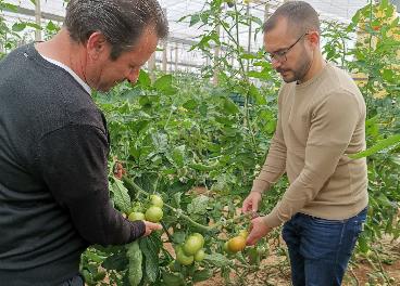 Tomates de Carrefour