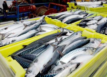 Acuerdo de Carrefour con sector pesquero