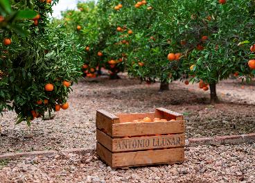 Llusar y Naranjas Torres se integran
