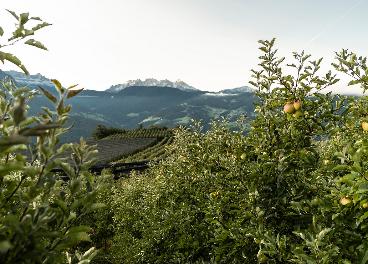 Manzanas en la región del Südtirol (Italia)