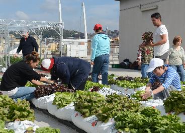 Proyecto de huertos sociales Hort al terrat